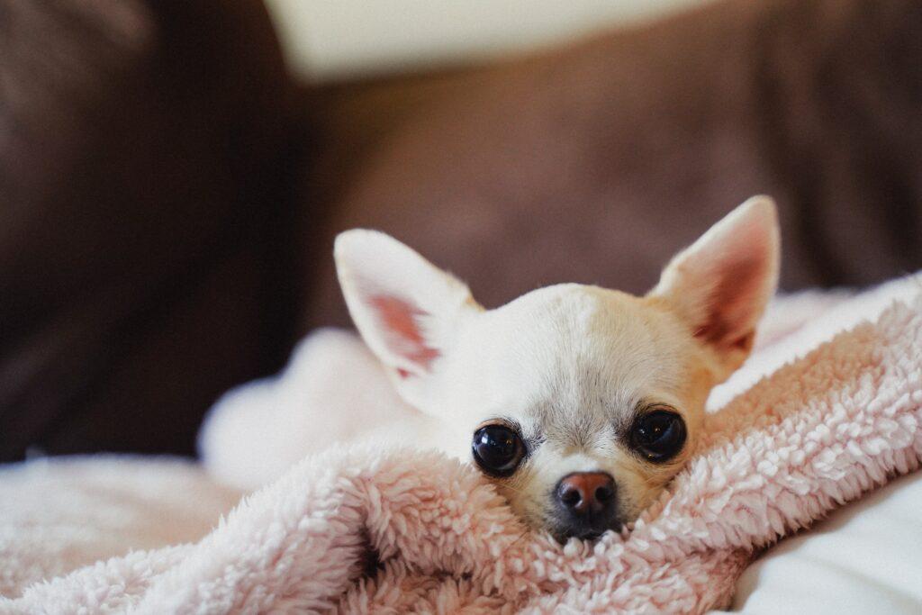 affitto animali, locazione animali domestici, animali condominio, affitto residenziale, inquilino cane, cane affitto, inquilino animali, affitto top, affittotop